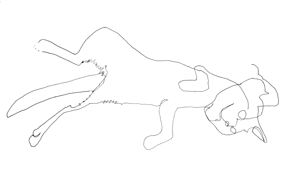 Blind contour drawing of cat